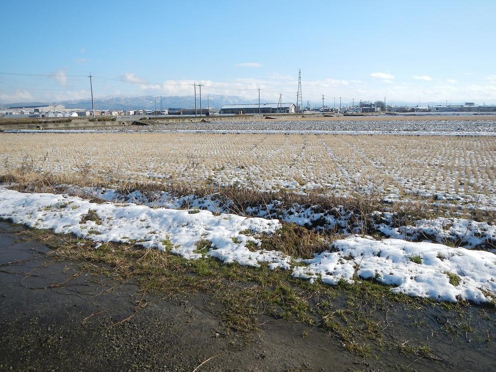 今年は雪がすくない